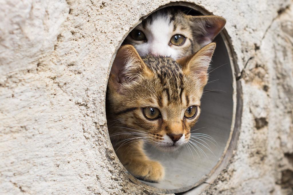 Ängstliche Kätzchen